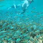宮古島でウミガメと泳ぐ! 高確率で会える時間と場所は?