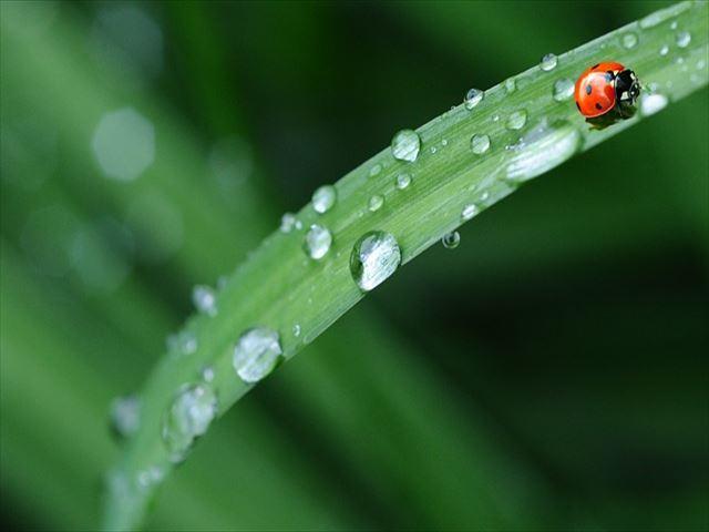 ladybug-574971_640_R